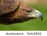 Golden Eagle Detail Head