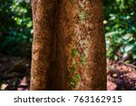 tropical tree trunk on the...   Shutterstock . vector #763162915