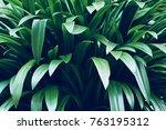 leaves in the garden  fresh... | Shutterstock . vector #763195312