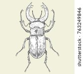 crying beetle with horns | Shutterstock .eps vector #763249846