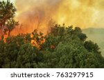 burning forest. california... | Shutterstock . vector #763297915