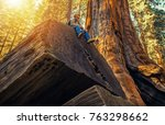 Sequoia Forest Hiker. Caucasian Men Seating on Ancient Fallen Sequoia Tree Log. Exploring Kings Canyon and Sequoia National Parks in California, United States of America. - stock photo