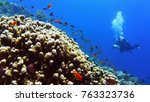 beautiful coral reef with fish  ... | Shutterstock . vector #763323736