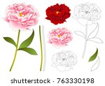 pink and red peony flower... | Shutterstock .eps vector #763330198