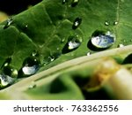 spring and summer green leafs... | Shutterstock . vector #763362556