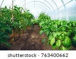young juicy green healthy... | Shutterstock . vector #763400662