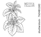 doodle plants melissa... | Shutterstock .eps vector #763481182