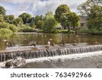 canada geese and ducks on the... | Shutterstock . vector #763492966