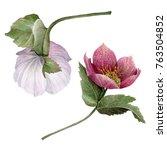 watercolor hellebore flowers ... | Shutterstock . vector #763504852