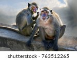 long tailed macaque   crab... | Shutterstock . vector #763512265