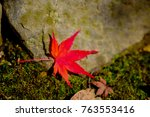 red maple leaves in autumn in... | Shutterstock . vector #763553416