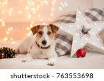 dog breed jack russel terrier... | Shutterstock . vector #763553698