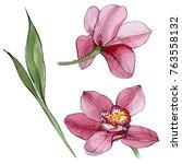 wildflower orchid flower in a... | Shutterstock . vector #763558132