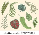 tropical or exotic leaves  leaf ... | Shutterstock .eps vector #763620025