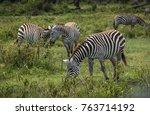 image of zebras in masai mara... | Shutterstock . vector #763714192