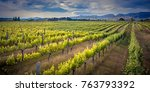 vineyard sideview under... | Shutterstock . vector #763793392