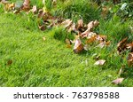 autumn leaves on green grass | Shutterstock . vector #763798588