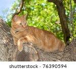 Orange Tabby Cat Up In A Tree