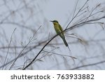 beautiful bird in nature | Shutterstock . vector #763933882