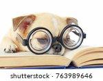chihuahua dog wear nerd glasses ... | Shutterstock . vector #763989646