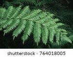 fern leaf for background in... | Shutterstock . vector #764018005