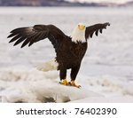 Alaskan Bald Eagle In Ice With...