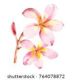 watercolor tropical blooming... | Shutterstock . vector #764078872