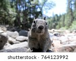 cute and curious squirrel in... | Shutterstock . vector #764123992