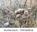 frozen plant herb. frost frost... | Shutterstock . vector #764160016