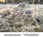 frozen plant herb. frost frost... | Shutterstock . vector #764160022