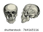 anatomy skull hand drawing... | Shutterstock .eps vector #764165116