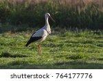 white stork in flight. white... | Shutterstock . vector #764177776