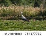 white stork in flight. white... | Shutterstock . vector #764177782