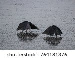fishing couple of black herons | Shutterstock . vector #764181376