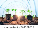 four young fresh sproutsin the... | Shutterstock . vector #764188312