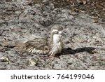 albany australia  bush stone... | Shutterstock . vector #764199046