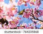 the japanese white eye.the... | Shutterstock . vector #764235868