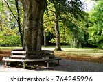 Bench Around A Big Tree