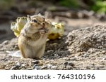 A Small Cute Chipmunk With...