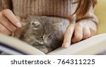 Stock photo close up of woman s hands woman holding a book and reading it little cute grey pussycat sitting 764311225