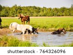 Stock photo horses are bathed 764326096