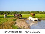 Stock photo horses are bathed 764326102