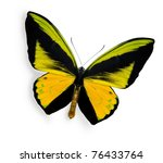 Stock photo beauty tropical butterfly isolated on white 76433764
