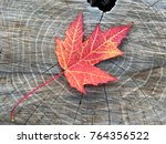 isolated fall maple leaf on... | Shutterstock . vector #764356522