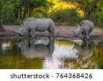 mother white rhino with its... | Shutterstock . vector #764368426