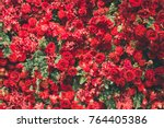 Stock photo red roses red flowers and green fir christmas decoration 764405386