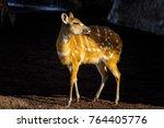 beautiful deer near the... | Shutterstock . vector #764405776