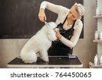 Stock photo grooming a little dog in a hair salon for dogs beautiful white poodle 764450065