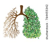 human lungs. respiratory system.... | Shutterstock .eps vector #764455342
