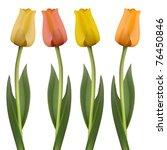 vector set of four tulips | Shutterstock .eps vector #76450846